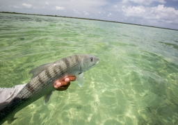 The Highlights of Cuba Fly Fishing